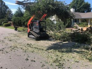 Tree Removal Services Wilmington